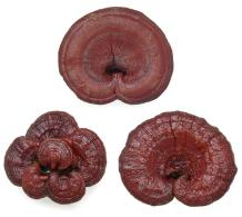 dried-reishi-mushrooms